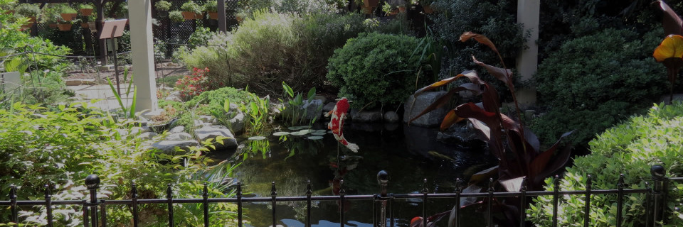 Koi ponds and Waterfalls 